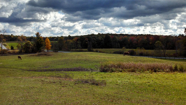 Turn-out paddock at horse boarding farm in Hyde Park, NY
