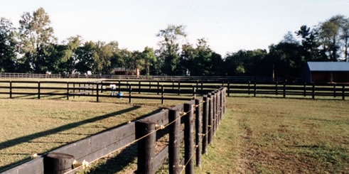 Turn-out at boarding stable in Hyde Park, NY